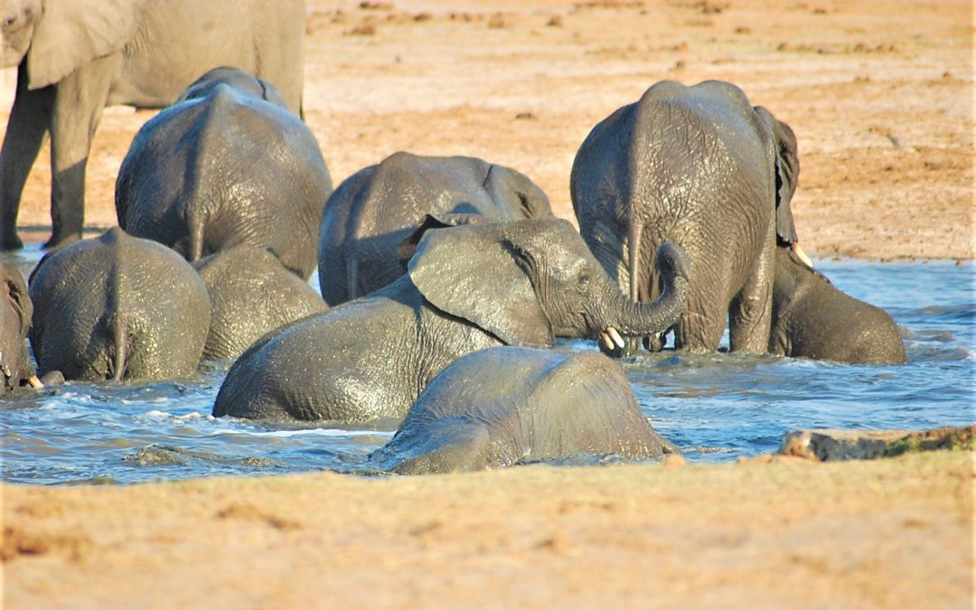 WHY ZIM TRADES IN ELEPHANT, OTHER WILDLIFE